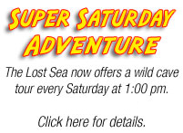 Super Saturday Tours